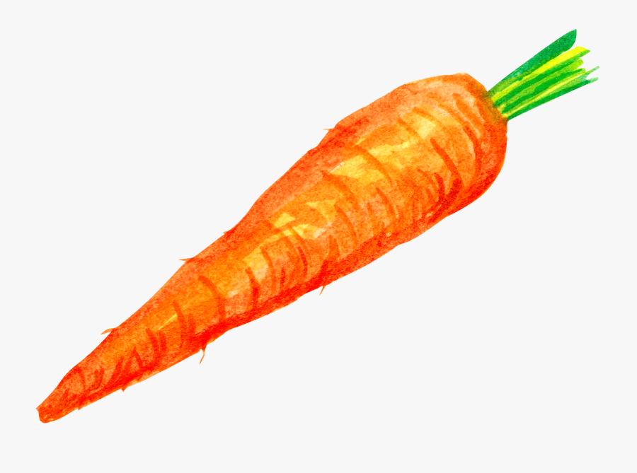 Carrot Clipart Wortel Vector Zanahoria Png Free Transparent Clipart Clipartkey Descarga maravillosas imágenes gratuitas sobre zanahoria. carrot clipart wortel vector