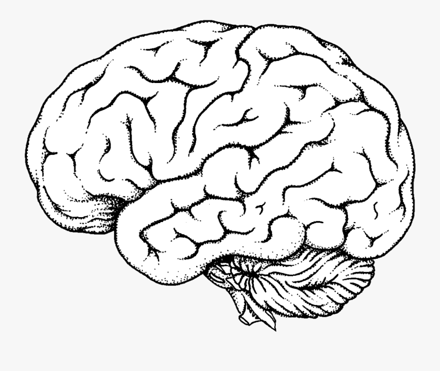 Brain Clipart Transparent Png - Diagram Blank Brain , Free ...