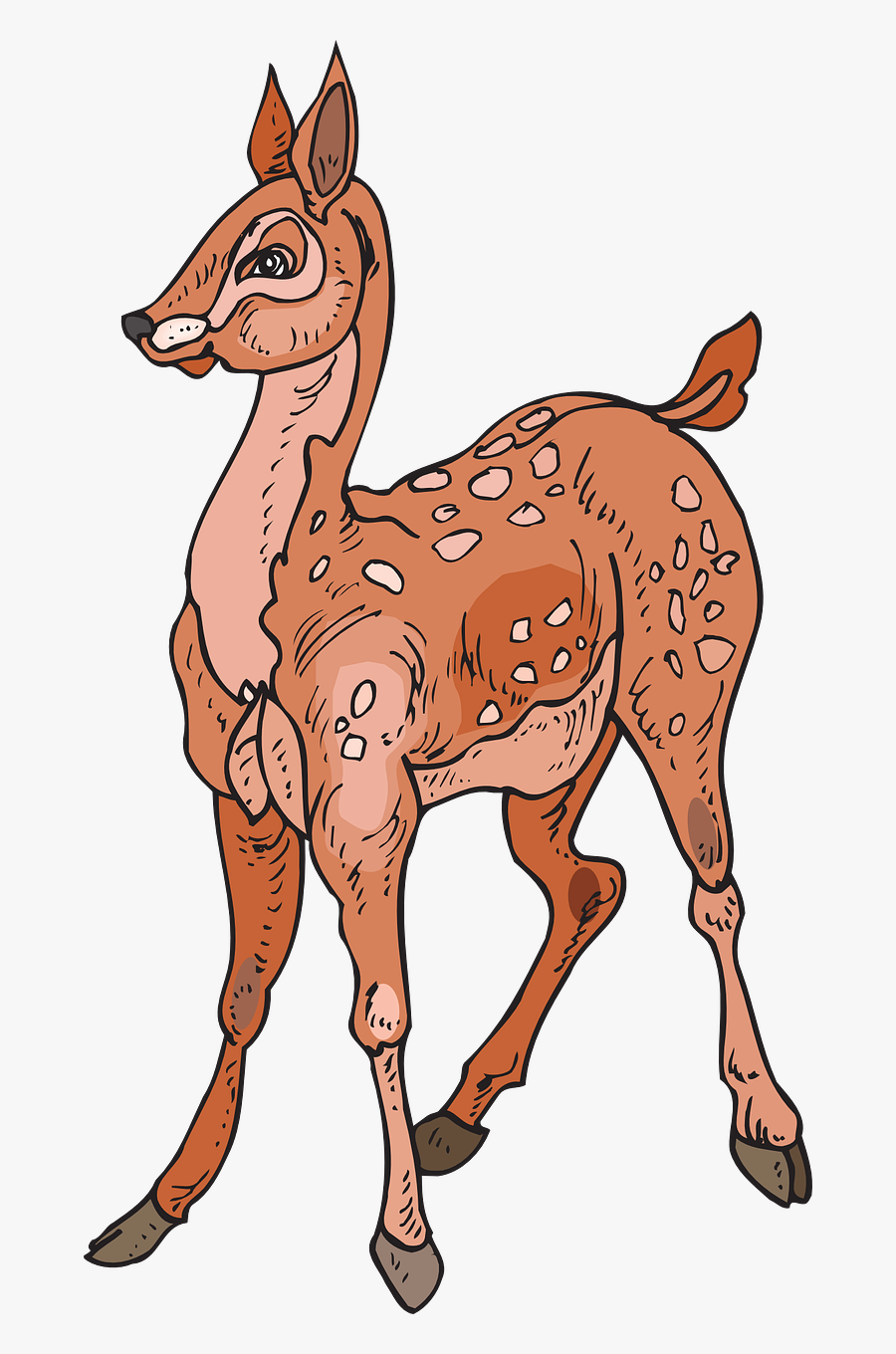 Fawn Forest Deer Free Picture - Лань Пнг, Transparent Clipart