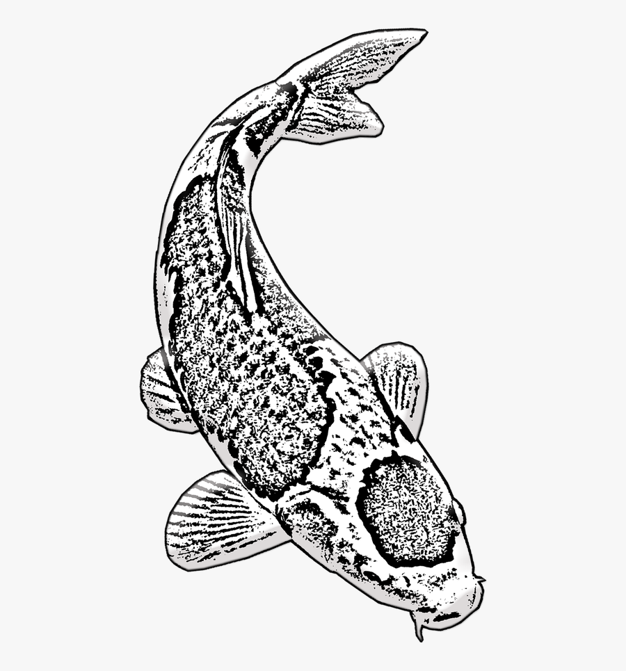 Koi Fish Koi Aquarium Ikan Koi Hitam Putih Free Transparent Clipart Clipartkey