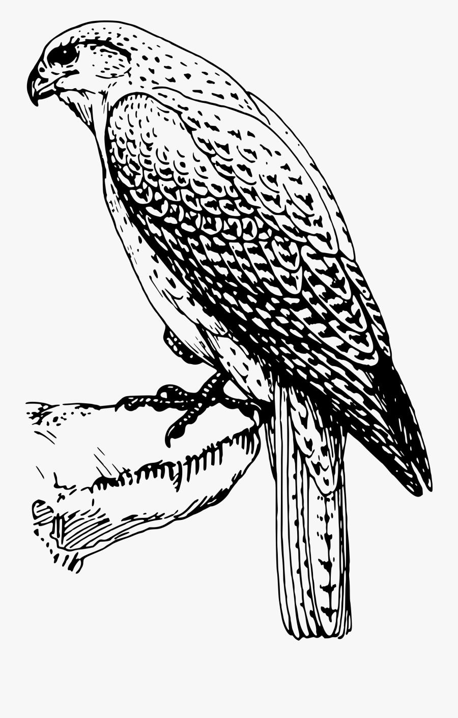 Transparent Peregrine Falcon Png - Falcon Bird Clipart Black And White, Transparent Clipart