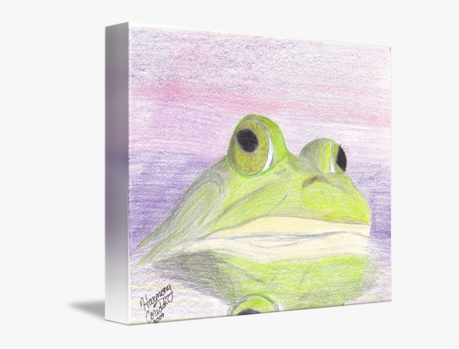 A Bull Frog At Sunrise By Harmony Coriddi - Toad, Transparent Clipart