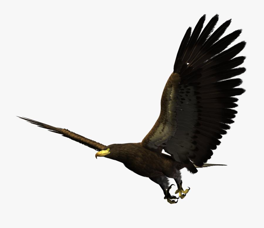 Bald Eagle Flying Png - Hawk Flying Png, Transparent Clipart