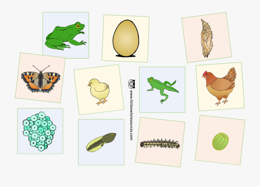 Life Cycle Cards Cover, Transparent Clipart