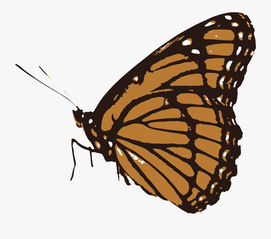 Butterfly Clipart Black And White Transparent, Transparent Clipart