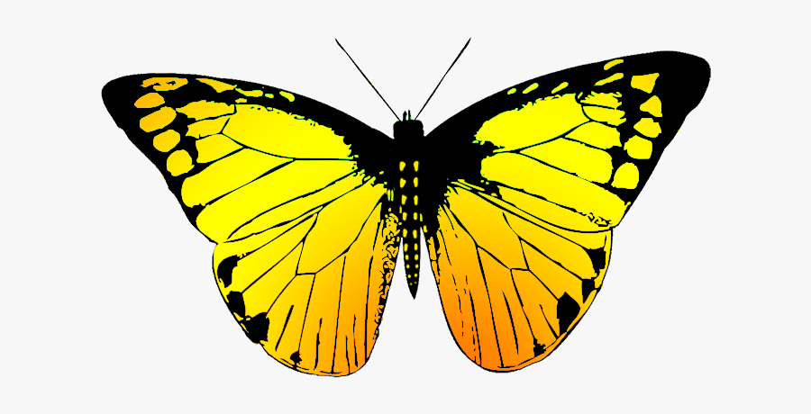 Beatifully Colored Butterfly Drawing - Transparent Butterfly Black And White, Transparent Clipart