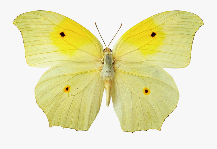 Transparent Buterfly Png - Yellow Butterfly No Background, Transparent Clipart