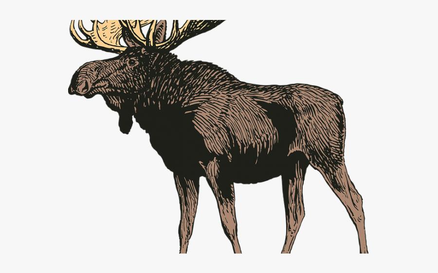 Clipart Moose, Transparent Clipart