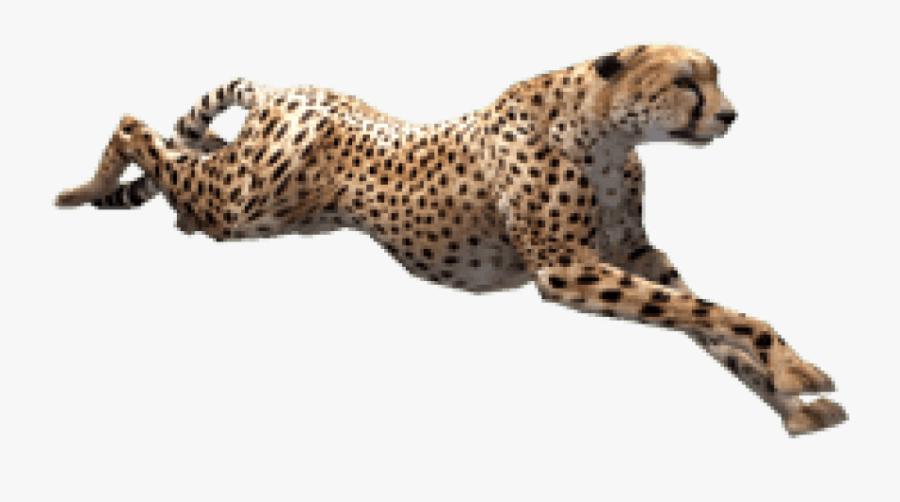Cheetah Zoo Tycoon - Cheetah Png, Transparent Clipart