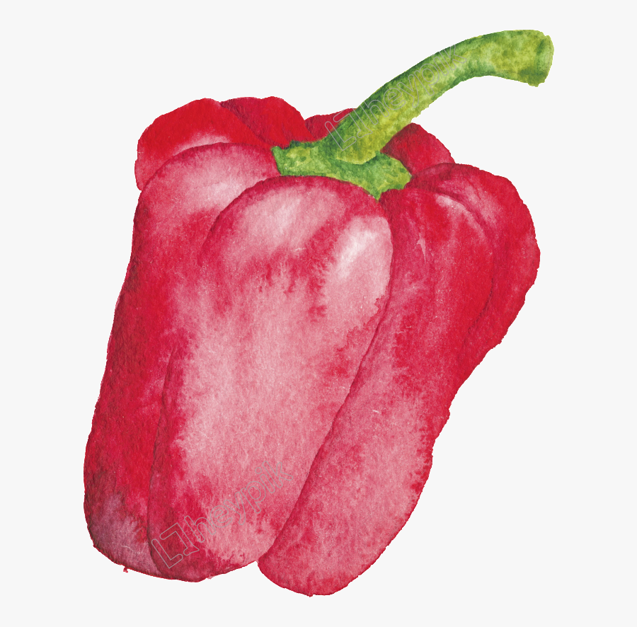 Drawing Vegetables Bell Pepper - Red Vegetables Drawing, Transparent Clipart
