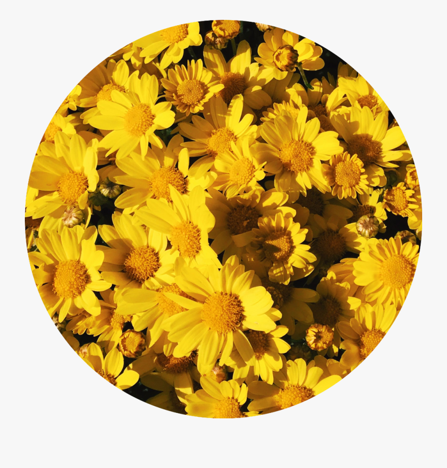 Background Aesthetic Yellow Flowers Tumblr Aesthetic Background