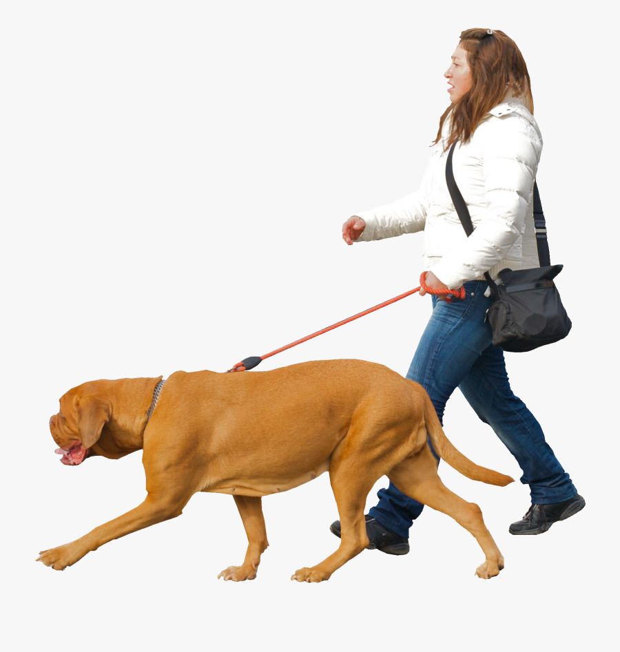 Dog,canidae,leash,dog Breed,dog Group,companion Dog,bloodhound,obedience - Walking With Dog Png, Transparent Clipart