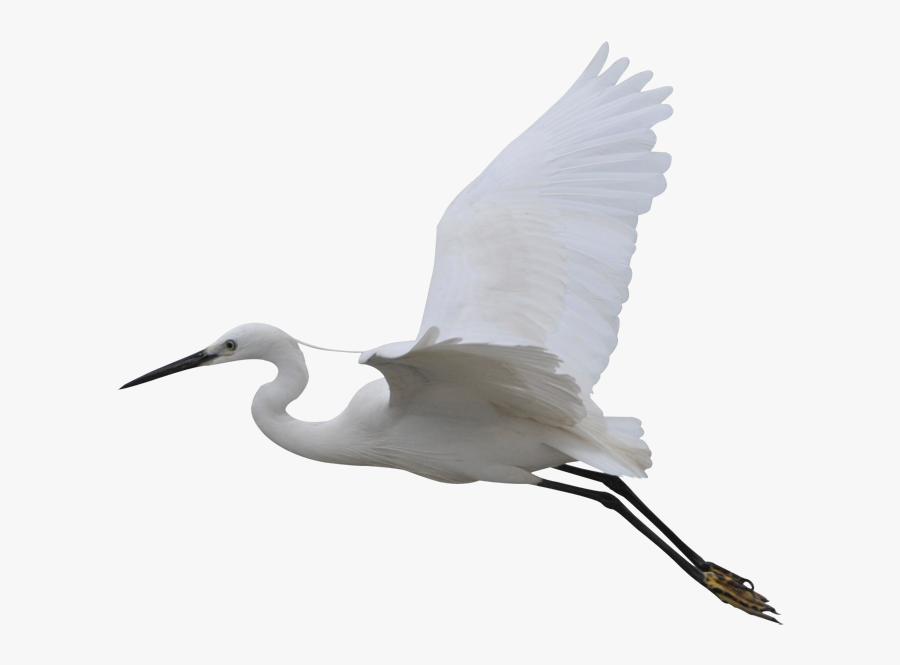 Clip Art Goose Beak - Water Bird, Transparent Clipart