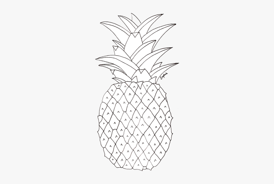 Clip Art Pineapples Drawing - Pineapple Pictures To Colour, Transparent Clipart