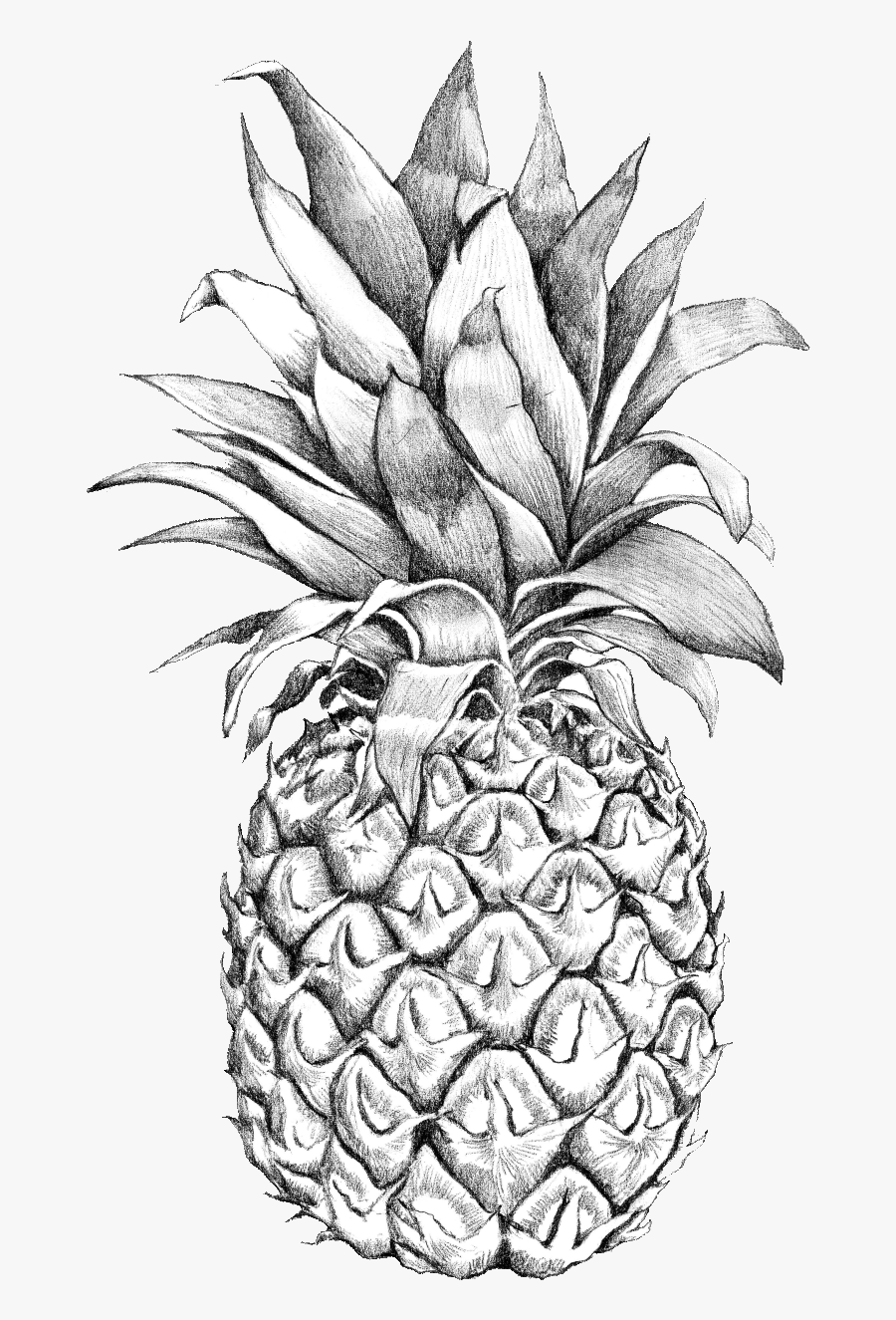 Drawing Detail Pineapple - Pineapple Outline, Transparent Clipart