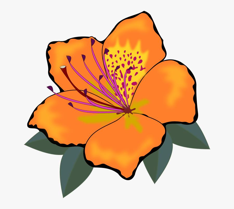 Clip Art, Flor, Flora, Flores, Flower, Nature, Plant - Orange Flower Clipart, Transparent Clipart