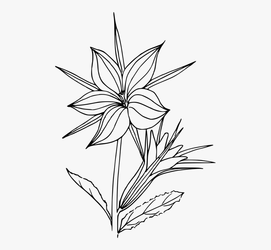 Petal,line Art,plant - Plants Line Art Transparent, Transparent Clipart