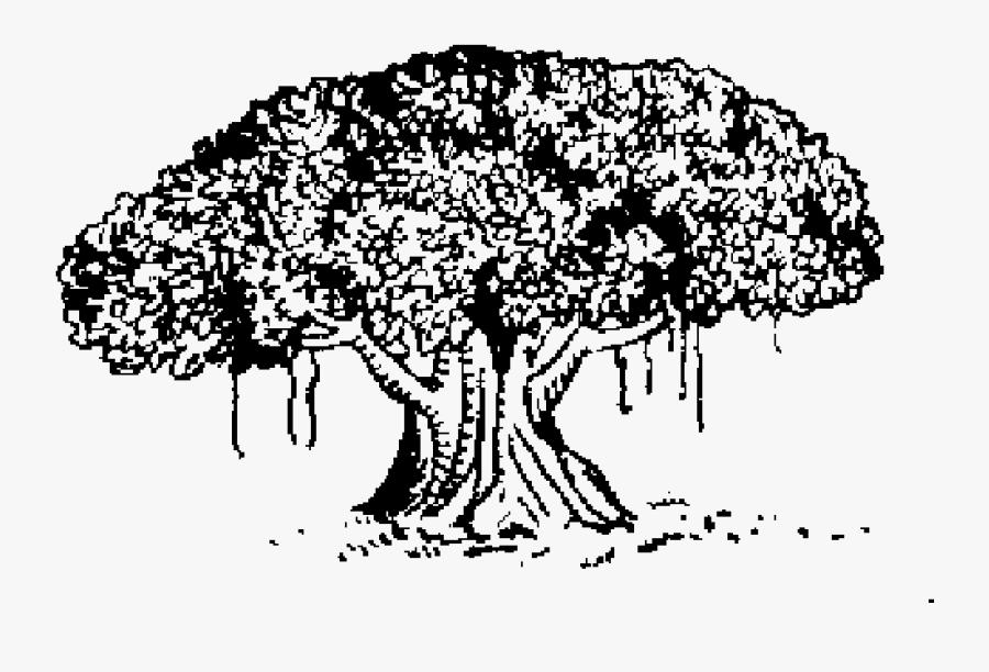 Indian Election Symbol Tree - Samajwadi Janata Party Rashtriya, Transparent Clipart