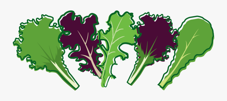Organic Red Salad Bowl - Salad Leaf Clipart Png, Transparent Clipart