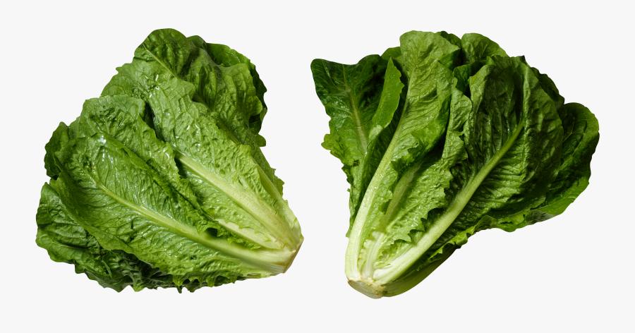 Green Salad Png Image - Romaine Lettuce Head, Transparent Clipart