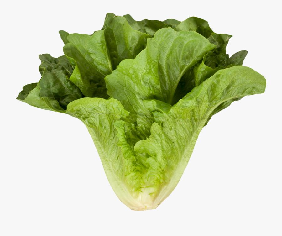 Clip Art Lettuce Png - Romaine Or Cos Lettuce, Transparent Clipart