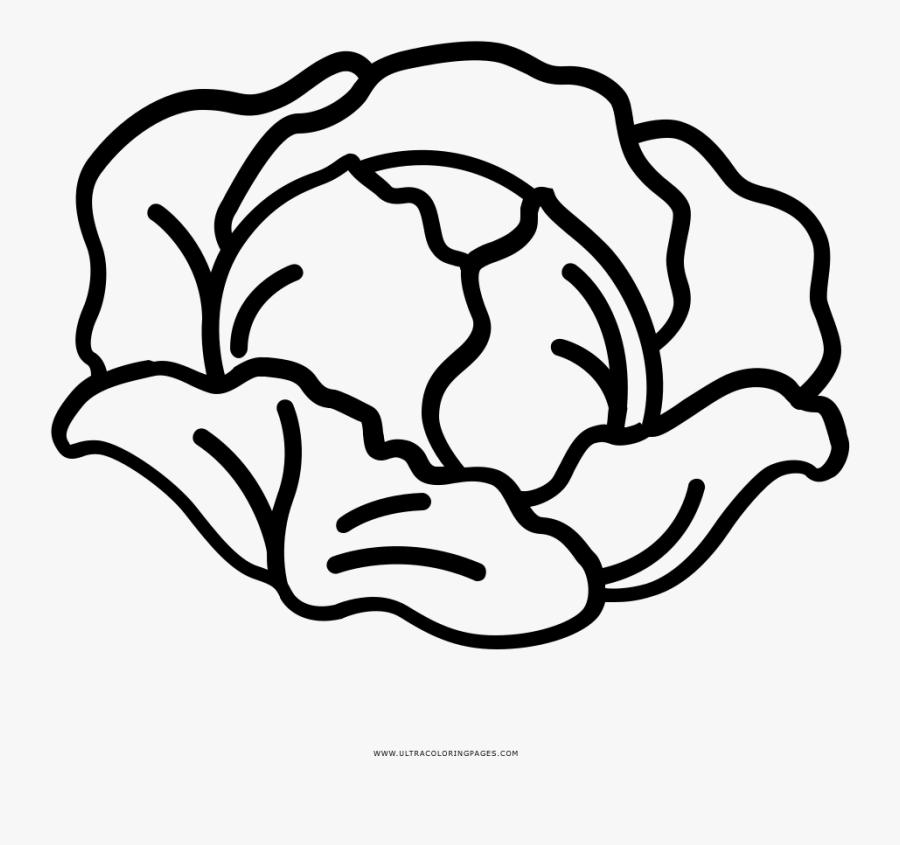 Transparent Lettuce Clipart Png - Drawing Of A Lettuce, Transparent Clipart