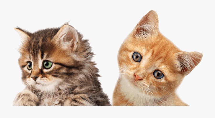 Clip Art Kittens Png - Gatinhos Png, Transparent Clipart