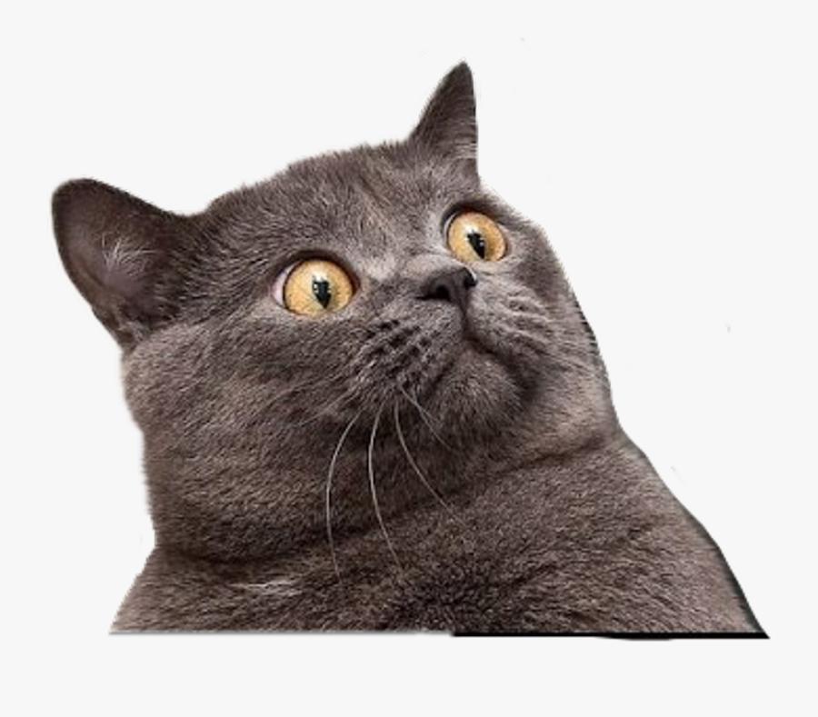 Transparent Funny Cat Png - Funny Cat Face Png, Transparent Clipart