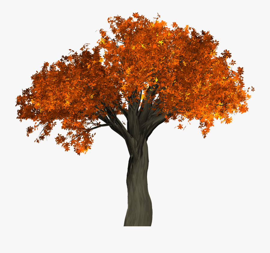 Autumn Tree Png - Autumn Tree No Background, Transparent Clipart