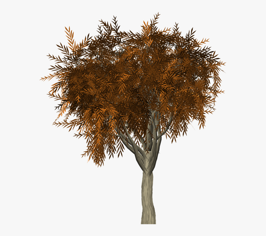 Tree Leaves Autumn Fall Branches Isolated Nature - Branch, Transparent Clipart