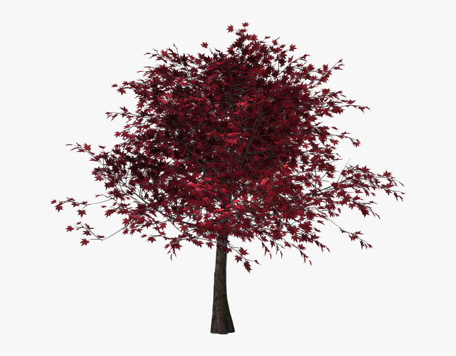 Tree, Autumn, Leaves, Red Leaves, Digital Art, Isolated - Tree With Red Leaves Png, Transparent Clipart