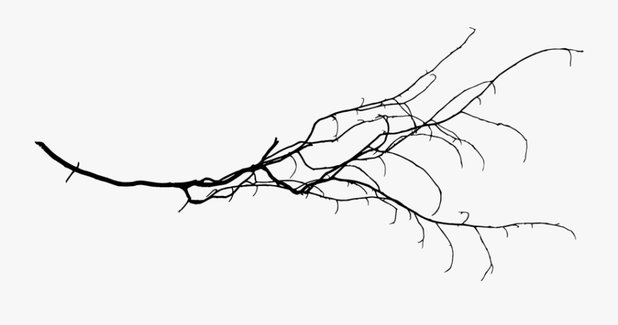 White Branch Png - Free Tree Branch Transparent, Transparent Clipart