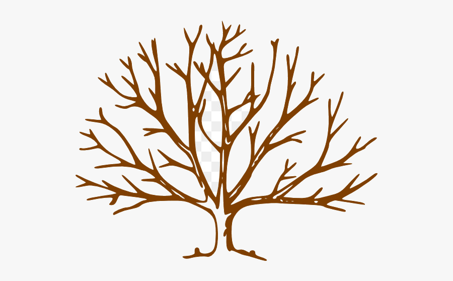 Fall Tree Free Content Website Plant Flower Transparent - Leave Less Tree Drawing, Transparent Clipart