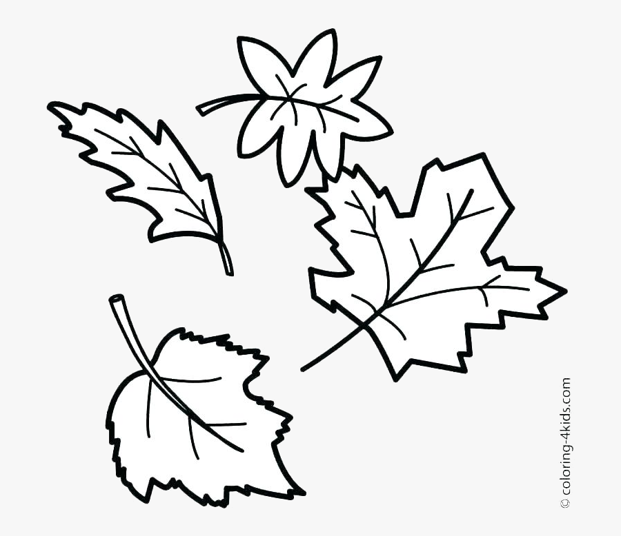 Leaf Outline Fall Outlines Autumn Maple Transparent - Autumn Leaves Drawing Easy, Transparent Clipart