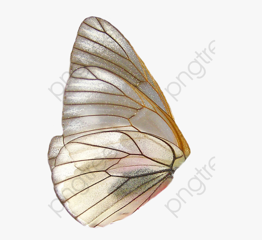 Butterfly Clipart Wings - Butterfly Wing Png, Transparent Clipart