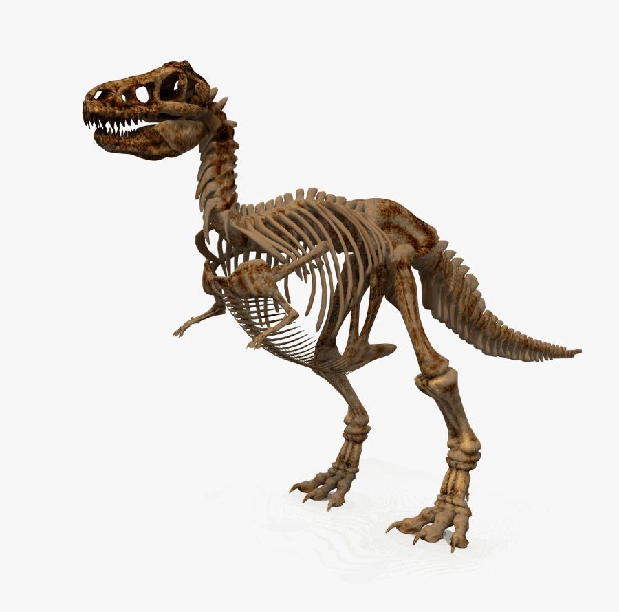 Free Png Download Dinosaur Png Images Background Png - T Rex Dinosaur Bones, Transparent Clipart