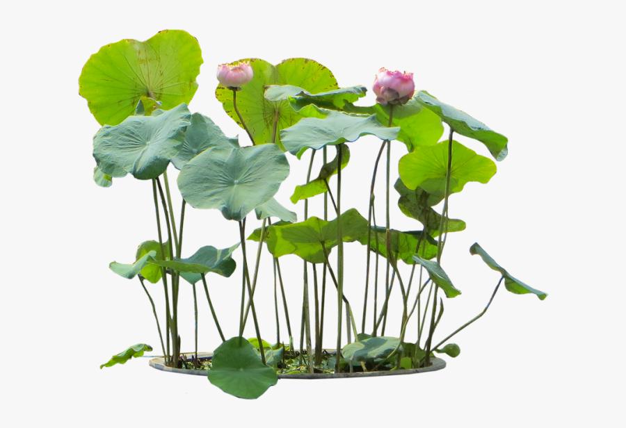 Transparent Flower Plants Png - Aquatic Plants Png, Transparent Clipart
