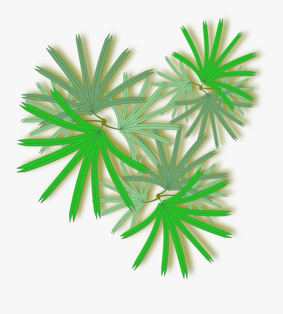 Palm Tree Top Png - Raphis Palm Top View, Transparent Clipart