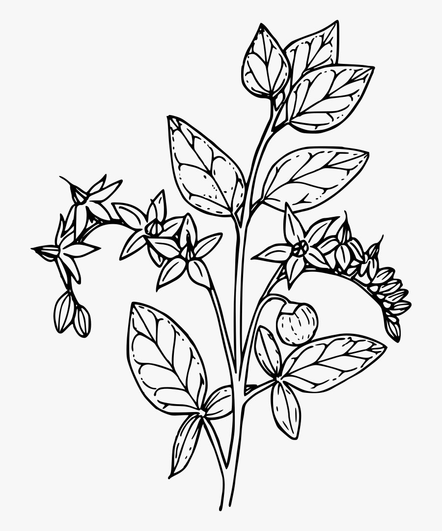 Flower Coloring Pages for Adults – coloring.rocks! | 1080x900