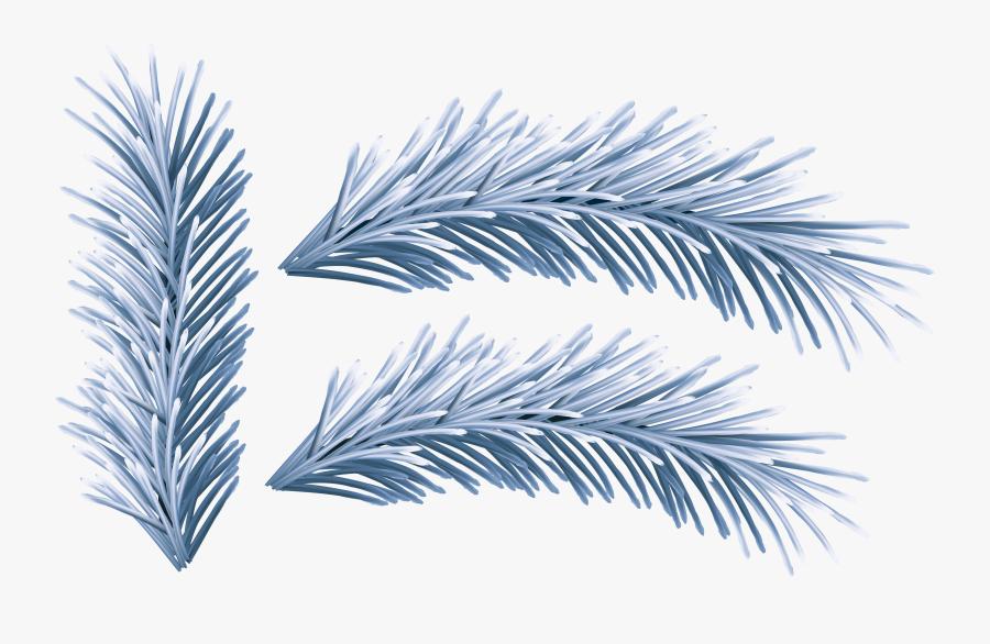 Pattern Clipart Winter - Attalea Speciosa, Transparent Clipart