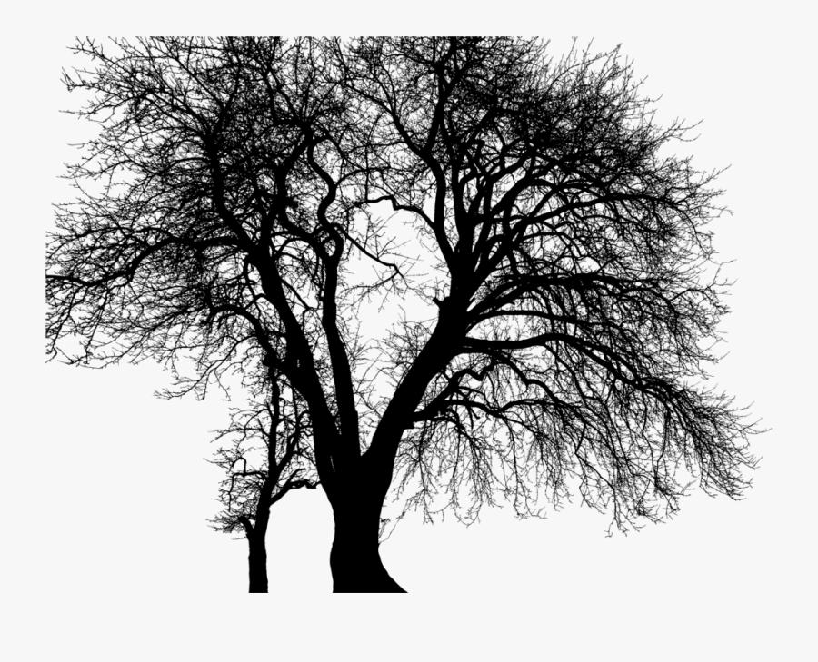 Plant,monochrome Photography,sky - Oak, Transparent Clipart