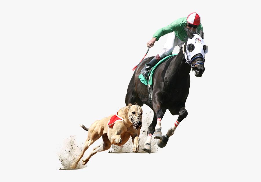 Horse Racing Png - Greyhound And Horse Racing, Transparent Clipart