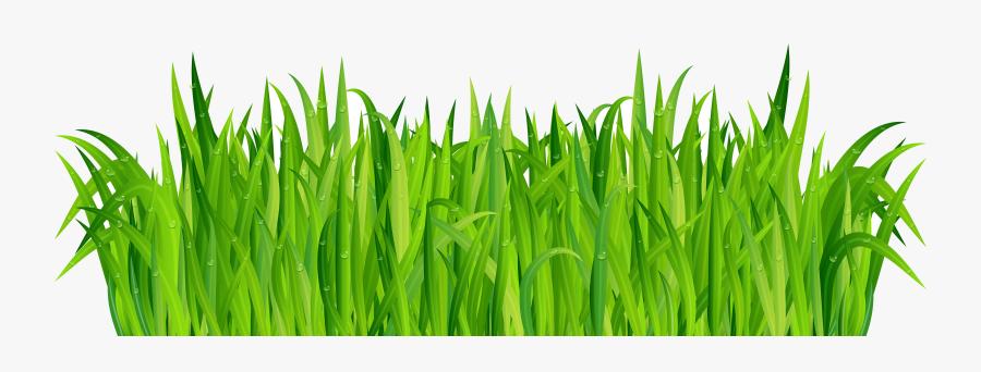Grass Fresh Green Clip Art Image Gallery High Transparent - Portable Network Graphics, Transparent Clipart