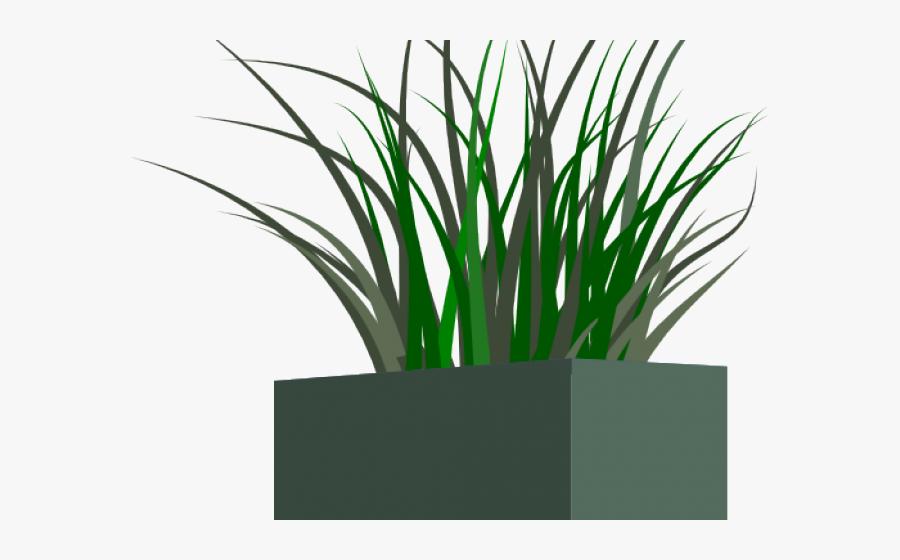 Transparent Tall Grass Png - Transparent Png Flower Box, Transparent Clipart