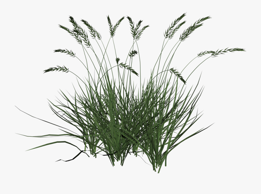 Flowering Plant,plant,grass,grass Family,sweet Repens,terrestrial - Transparent Background Long Grass Png, Transparent Clipart