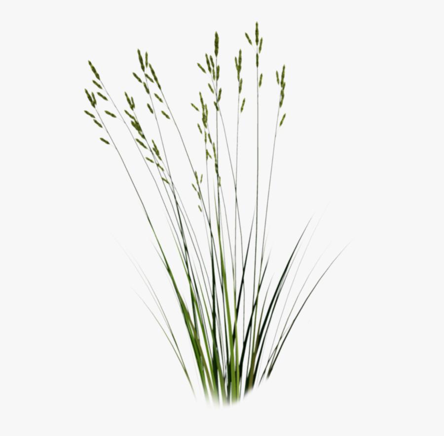 Beach Grass Png - Cut Out Grass Png, Transparent Clipart