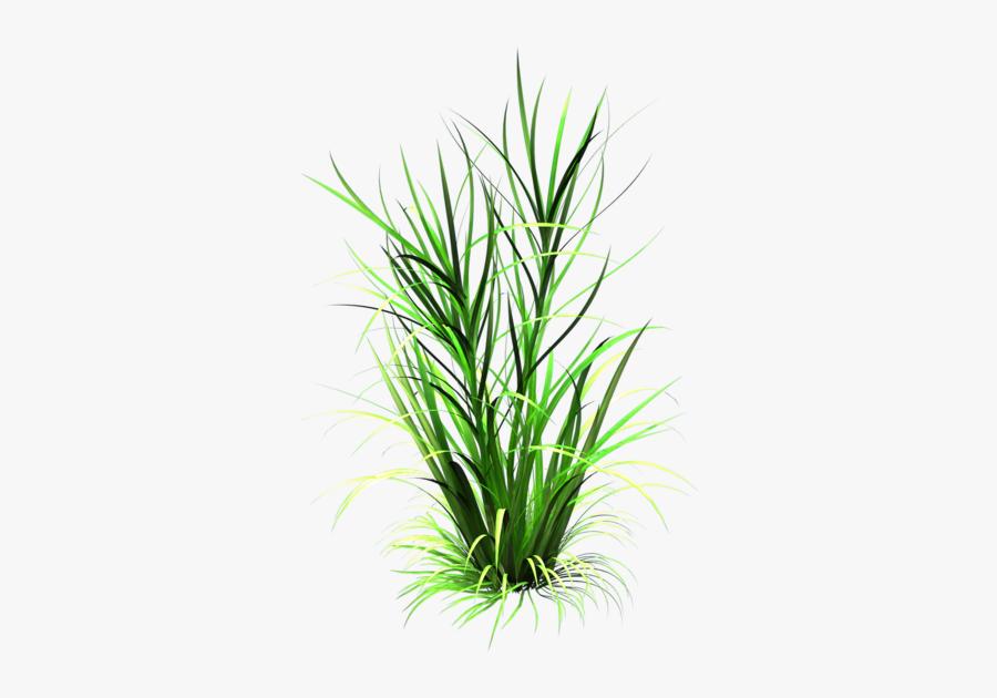 Tall Clipart Tall Plant - Transparent Grass Texture, Transparent Clipart