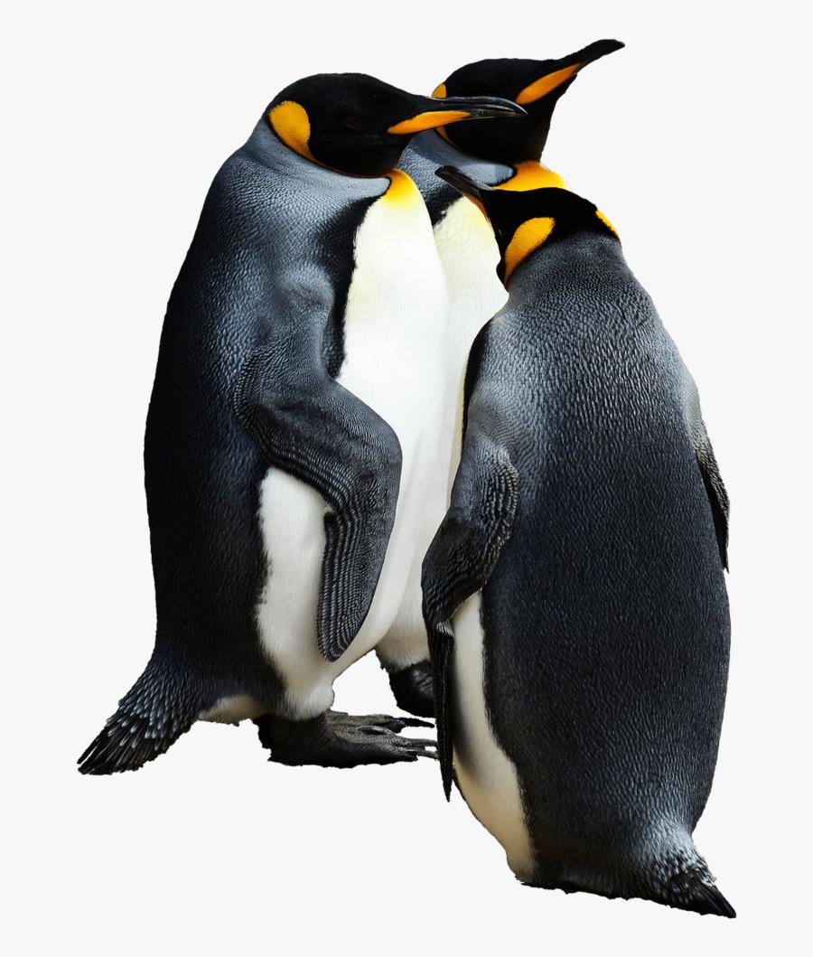 Emperor Penguin Transparent Background, Transparent Clipart
