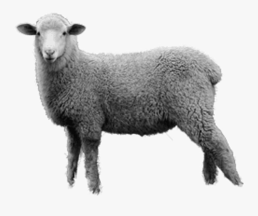 Transparent Sheep Image Black And White, Transparent Clipart