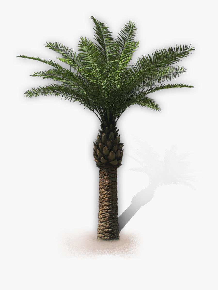 Florida Thatch Palm Tree - Palme Kunstpflanze, Transparent Clipart